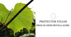 Efectos de la aplicación foliar de un producto con base de calcio, en el estrés térmico y la acidez del vino de garnacha tinta