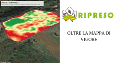 Beyond the vigour map: having identified the degree of variability in the vineyard, it is essential to identify the most suitable management method