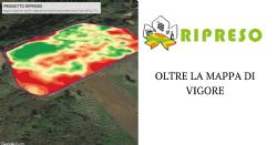Mappa di vigore del vigneto in studio presso Azienda Agricola Baraccone