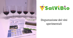 Tasting of experimental wines produced within SalViBio project