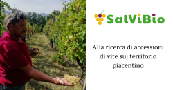 Searching for vine accessions in Piacenza province