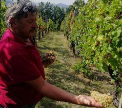 Massina winery