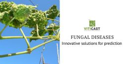 Innovative solutions for the prediction of fungal diseases in grapevine