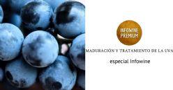 Maduración, selección y tratamiento de la uva