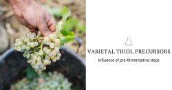 Influence of pre-fermentative steps on varietal thiol precursors