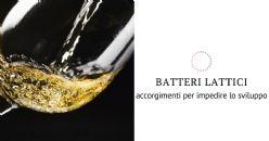 Come impedire l'insorgenza dei batteri malolattici?