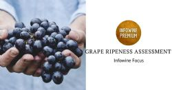 Grape ripeness assessment and initial processing of grapes