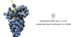 Ralentar la maduración de la uva puede mejorar su calidad