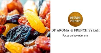 Focus on dried fruit aroma and key odorants of French Syrah of the northern Rhone valley