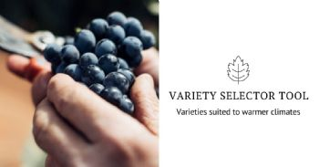 New tool identifies grape varieties suited to warmer climates