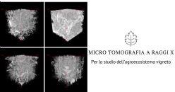 Tecniche strumentali di micro tomografia a raggi X applicate allo studio dell'agroecosistema vigneto