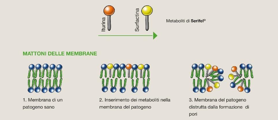 Produzione di metaboliti